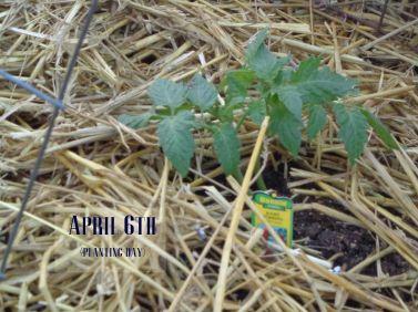 april6th