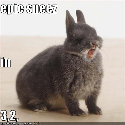 funny_pictures_rabbit_is_about_to_have_an_epic_sneeze