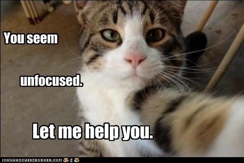 catfocus