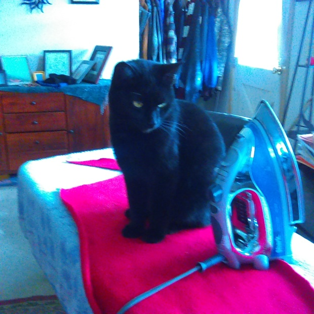 Still Life with Cat and Iron