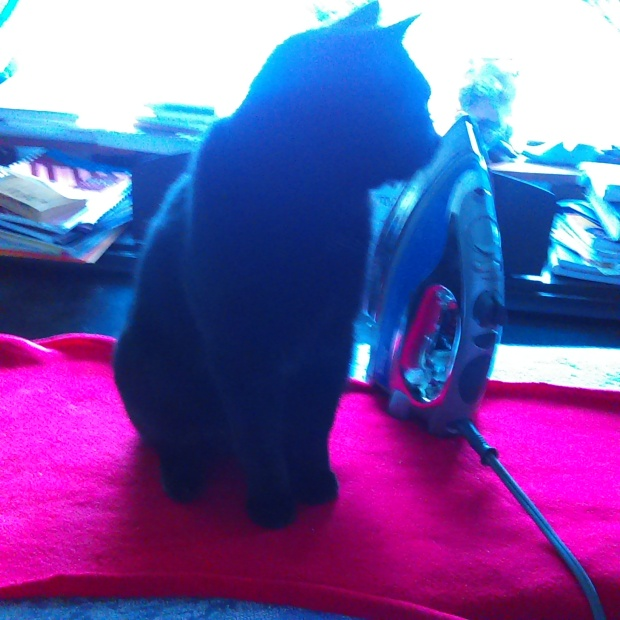 Emmy the Rascal on the ironing board