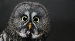 owl-2-shock