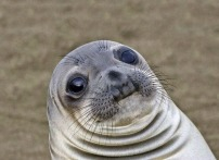 shocked-seal