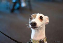 surprised-shocked-animals-funny-1__700