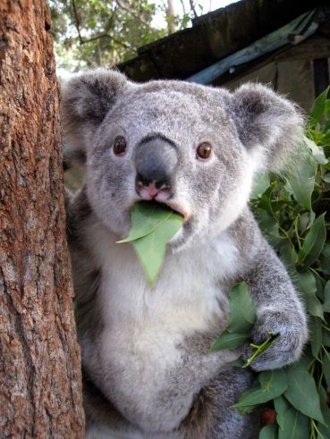 surprised-shocked-animals-funny-6__700